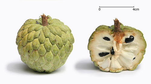 800px-sugar_apple_with_cross_s
